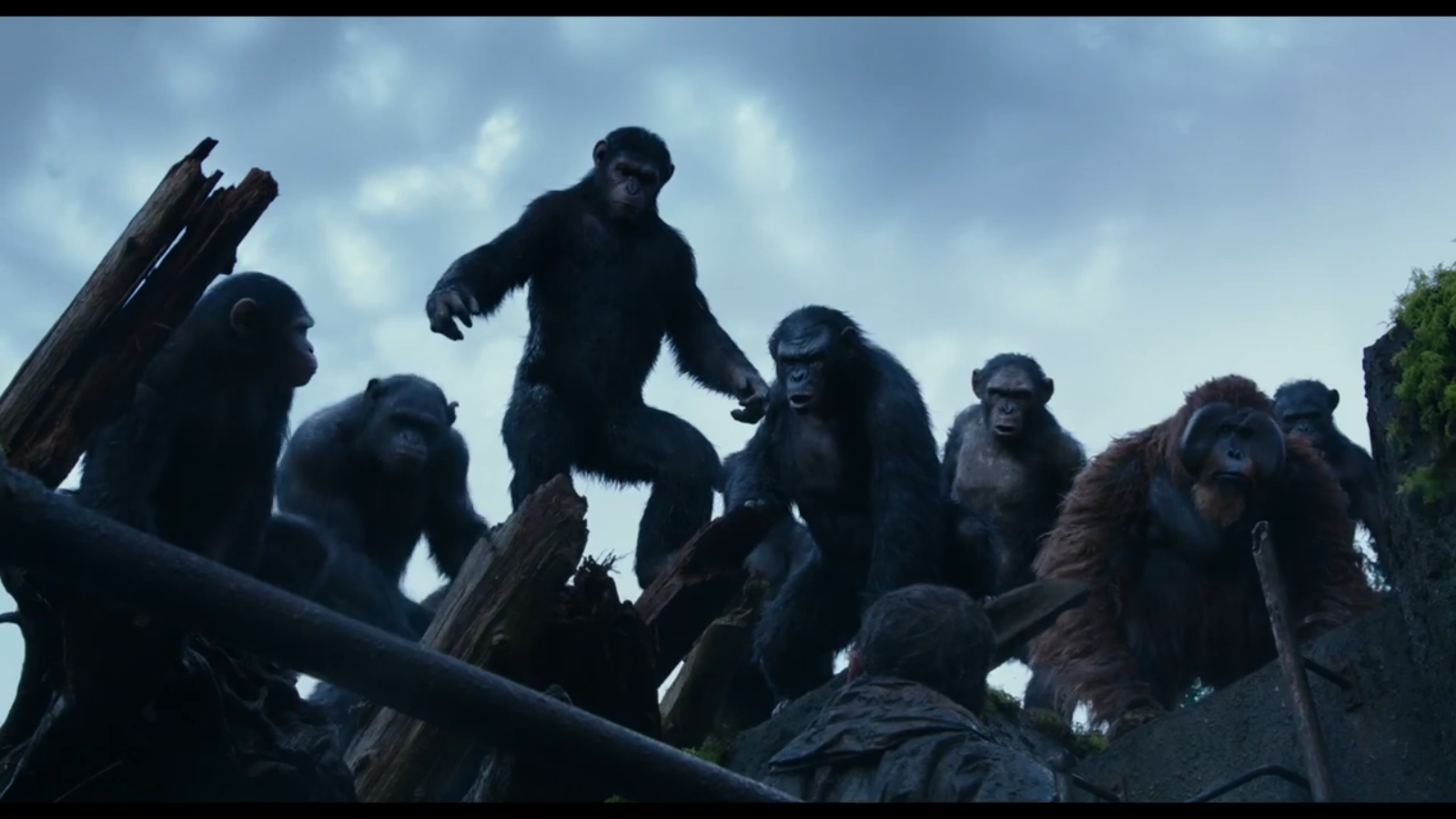 Apes on high ground